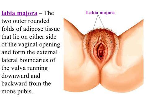 am i normal vaginal opening jpg 728x546